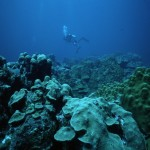 Report on the state of Curacao's reefs (2012)